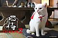 News_xlarge_nekozamurai_201508_05