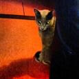 猫ストーカー