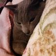朝だぞ〜ネコチ♪