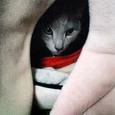 ネコハウスのカリン