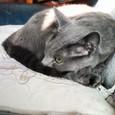 陽光の下の丸ネコ