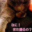 モデル猫〜カリン♪