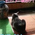 瞑想中〜スフィンクス猫