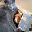 猫は本は読まないニャ!