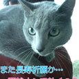 江ノ島カリン散歩①