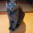 帰宅早々…宇宙猫