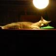月の下のネコ