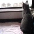 雨の窓辺で…
