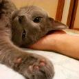手のひら枕