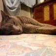 カリンとゴロ寝