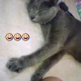 カリン…眠気に負ける