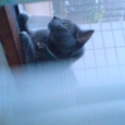 窓越しのカリン