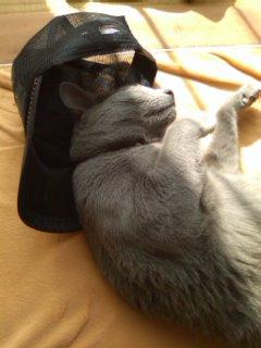帽子好きなカリン