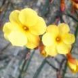 黄色い花がゆれる