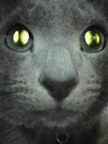 宇宙猫 変身の瞬間