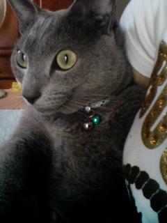 カラスにビビる猫
