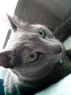 隙間猫のカリン