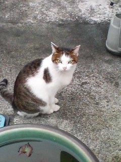 今朝のイケメン猫