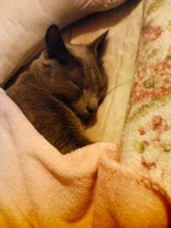 寝坊猫カリンの寝顔