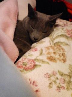 猫と一つの枕…スリルやな