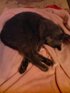 起きてくれない猫
