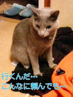 拗ネコ〜カリン♪