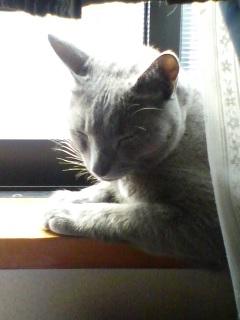 窓辺のカリン♪