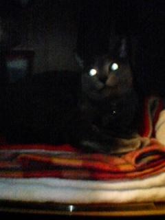 クローゼット猫♪