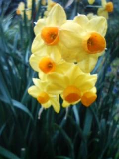 恵比寿の花♪&僕妹