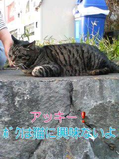江ノ島カリン散歩②