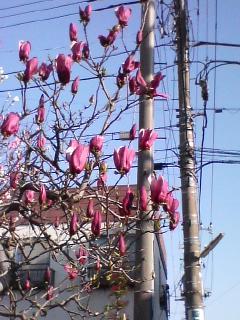 松潤COLORの花♪