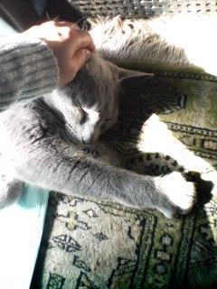 ヒダマリに猫♪