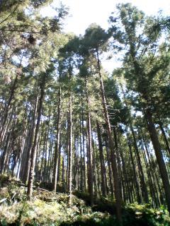 山道を登り…花畑へ