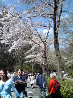 垂れ桜に感激♪