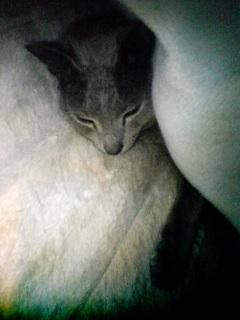 毛布の奥に…