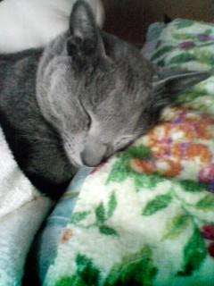 寝顔フェチなアタシ