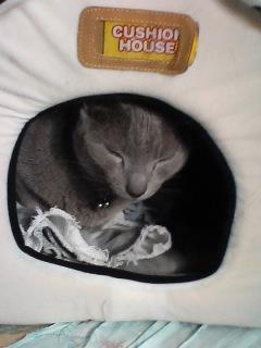 洗濯したネコハウスに…