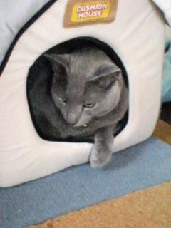 フテクサレ猫