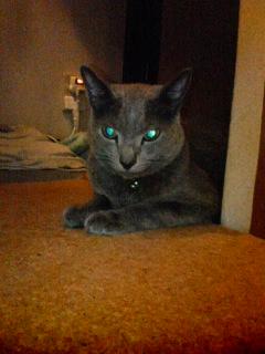 座敷ワラシな宇宙猫