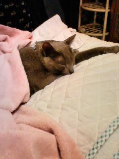 下◎猫…眠る