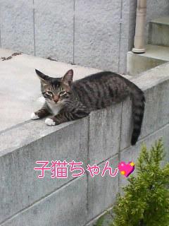 近所の子猫