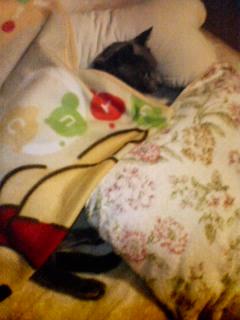 プーさん毛布