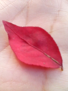 秋を見つけたよ