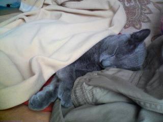 猫の寝姿♪
