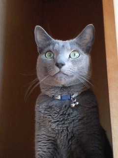 猫らしい顔