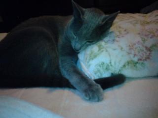 丸く寝るネコ
