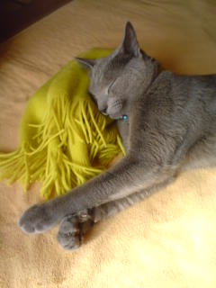マフラーが枕♪