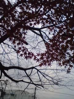 紅葉のリース