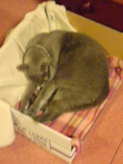 箱猫…拾って下さい