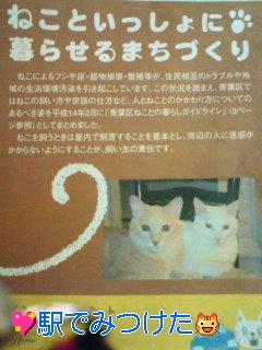 ネコに敏感なの